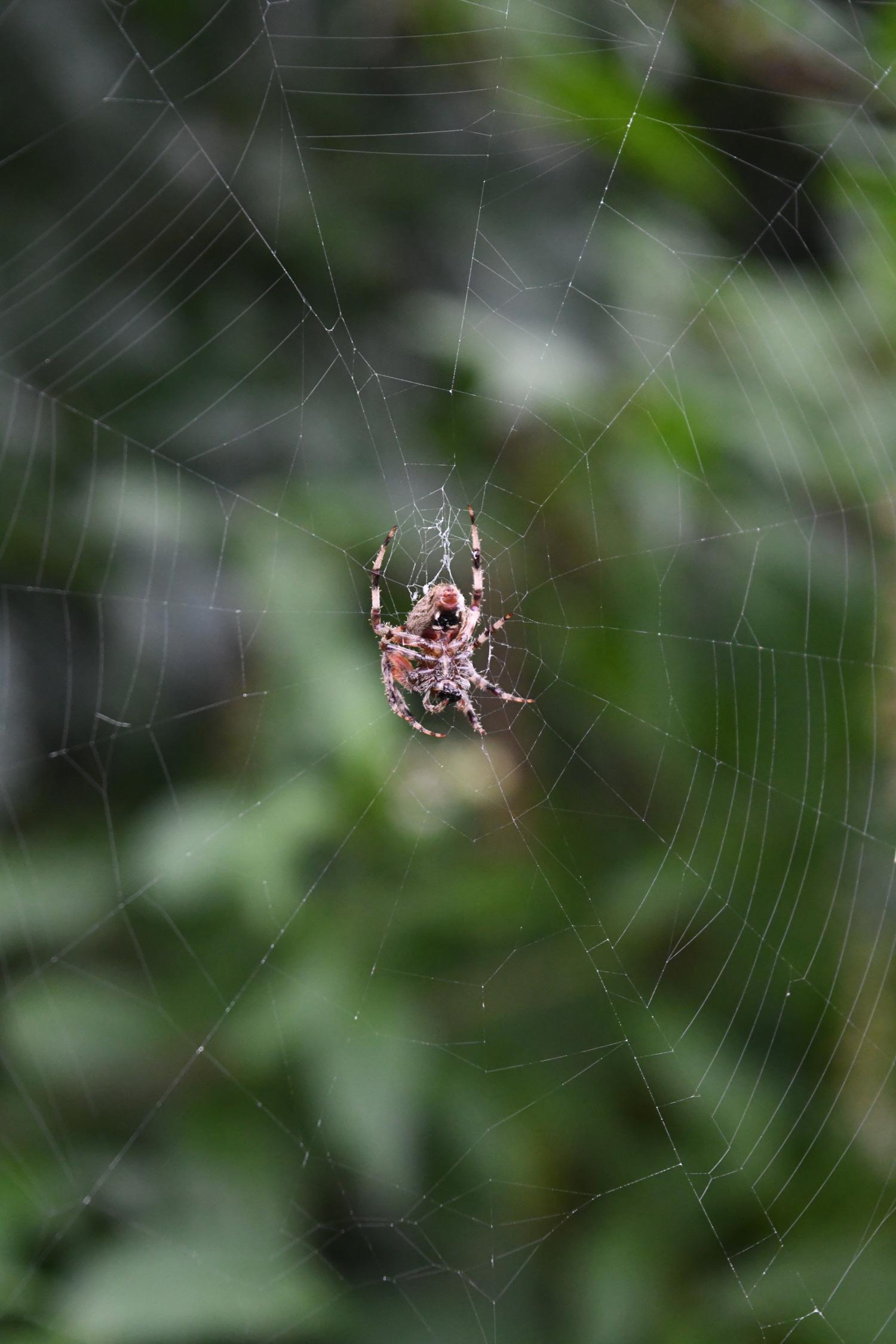 Spider, Prospect Park