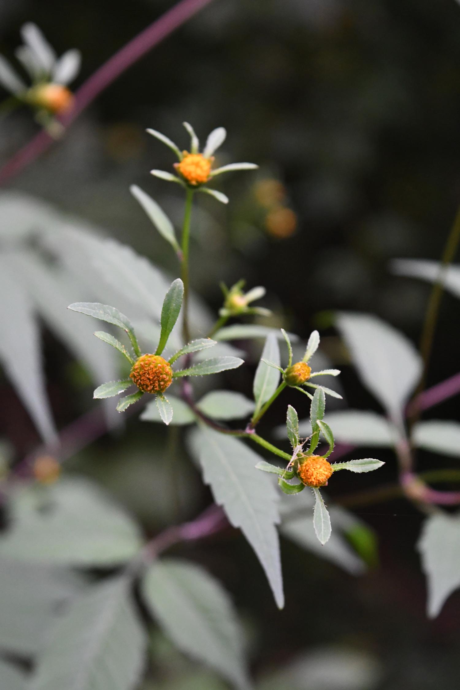 Flowers, Prospect Park