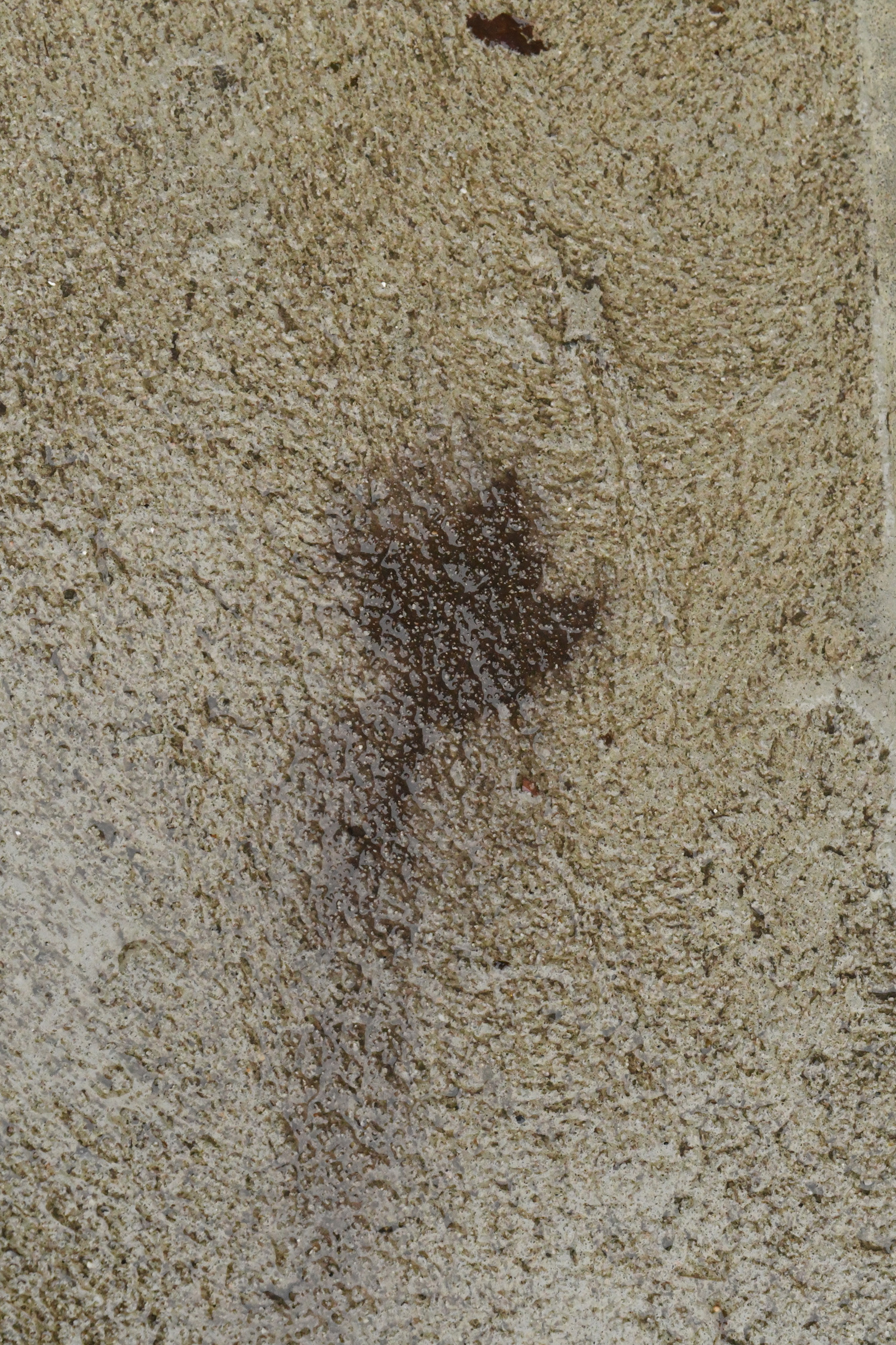 Leaf stain on cement