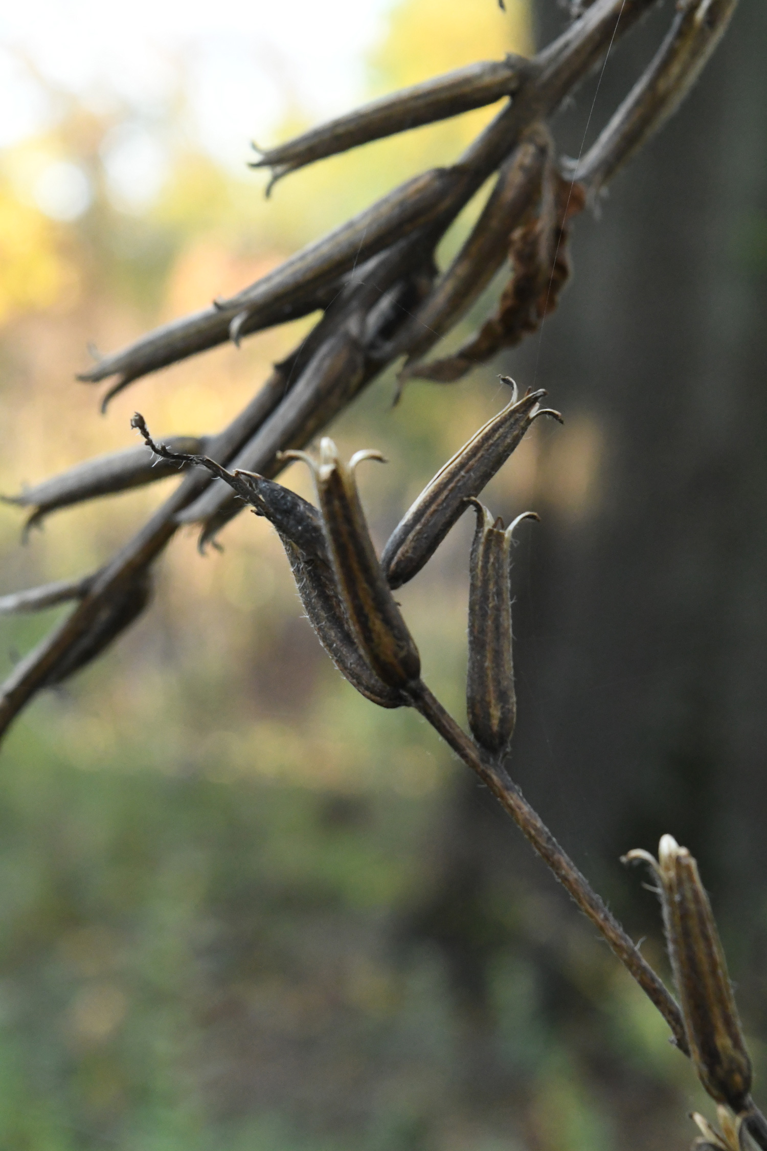 Dried seeds, Prospect Park