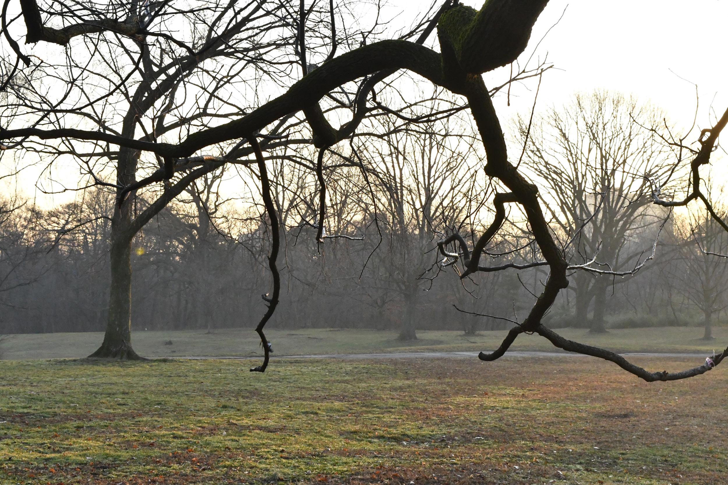 Under the black walnut tree, Prospect Park