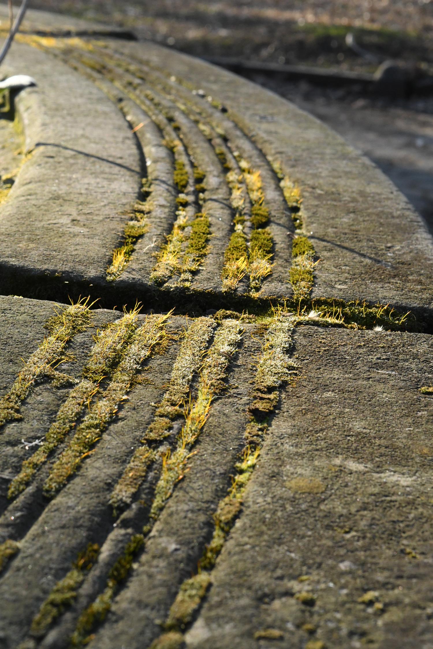 Moss in planter, Prospect Park