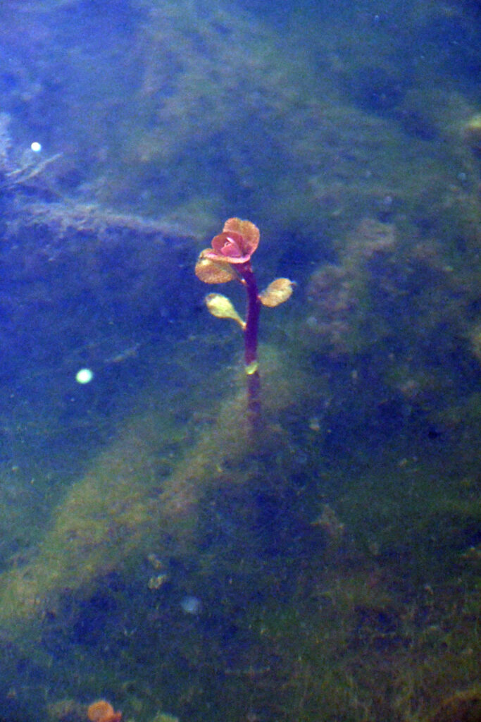 Underwater, Prospect Park