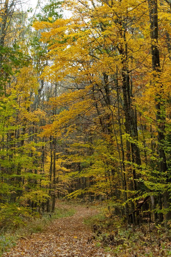 Hiking path, Questing, New Marlborough, Mass.