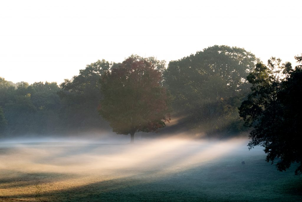 Mist, Prospect Park